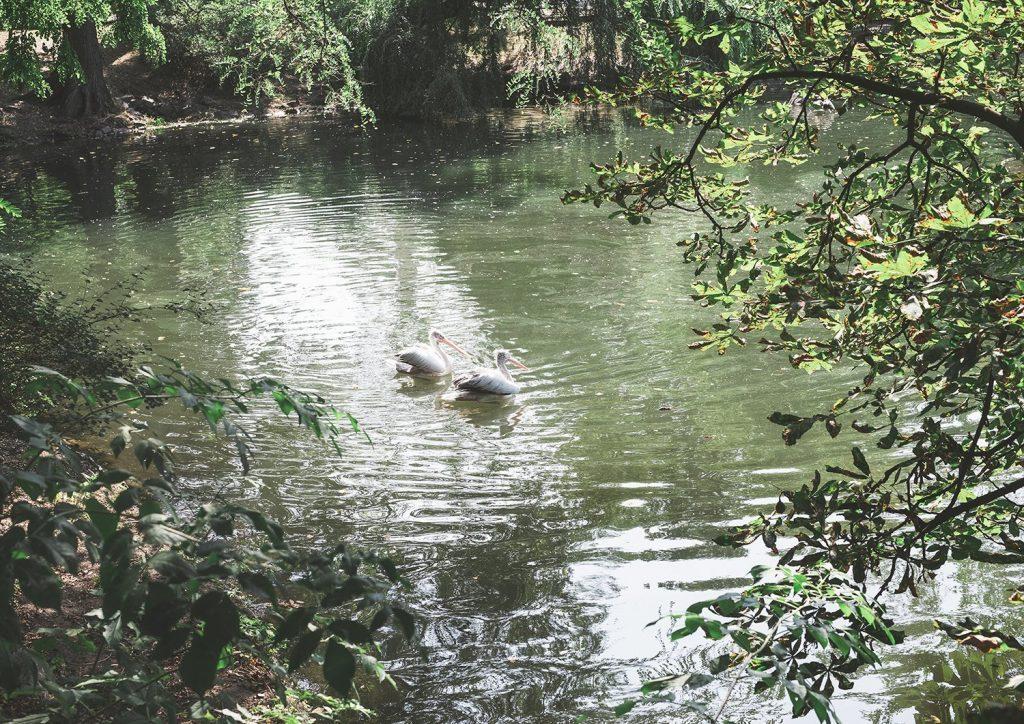 Wrocław Zoo & Afrykarium